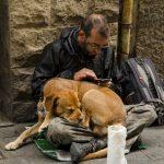 Obdachlos dog 1487553 1920