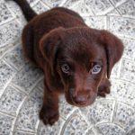 puppy 1047722 1920