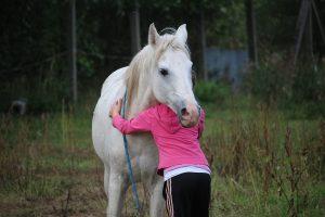horse 958320 1920