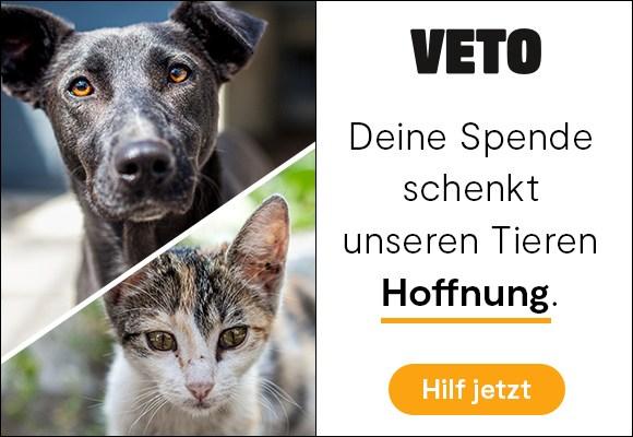 2020 Hund und Katze fuer Vereine 2