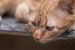 cat 4547105 1920